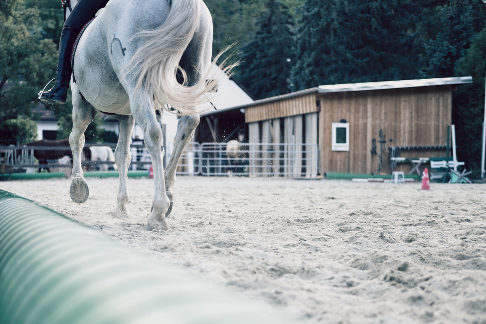 Jump Into Show Season: Tips For A Better Season
