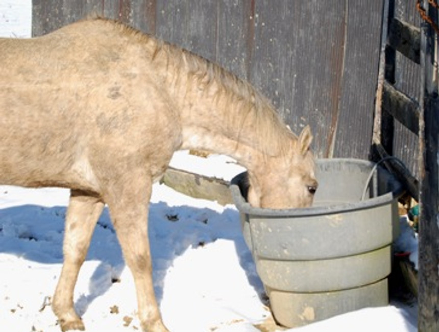 Winter How-to: Keep Your Horses Water from Freezing
