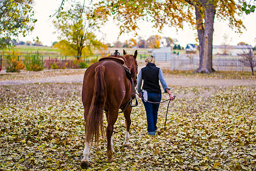 How to Prepare Your Horse for Fall: Management Considerations