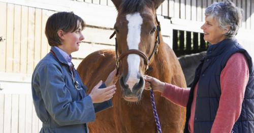 Horse Supplements: Releira