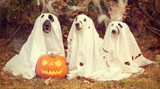 Spooky and Funny Halloween Ideas