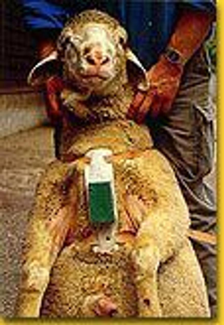 Ram Ewe Sheep Marking Harness Crayon ORANGE Breeding Heat Detection Goat