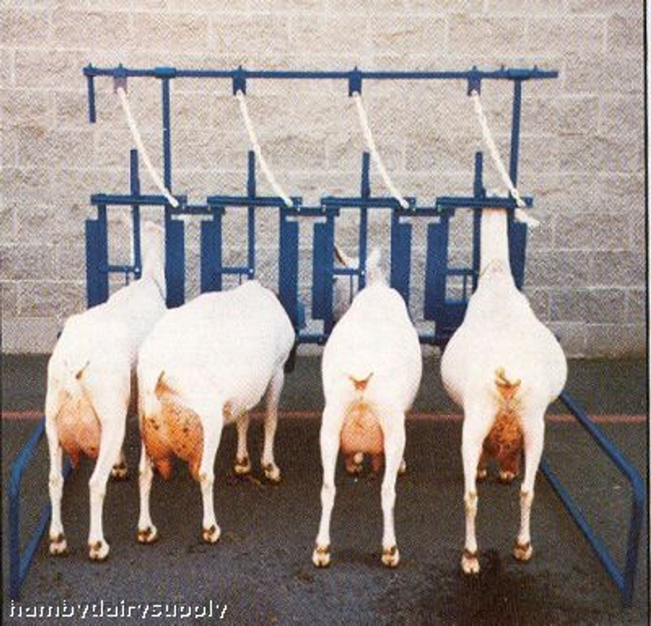 4 Stanchion Assembly for goats / sheep - Self Standing