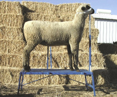 Sydell Goat and Sheep Equipment - Page 1 - Hamby Dairy Supply
