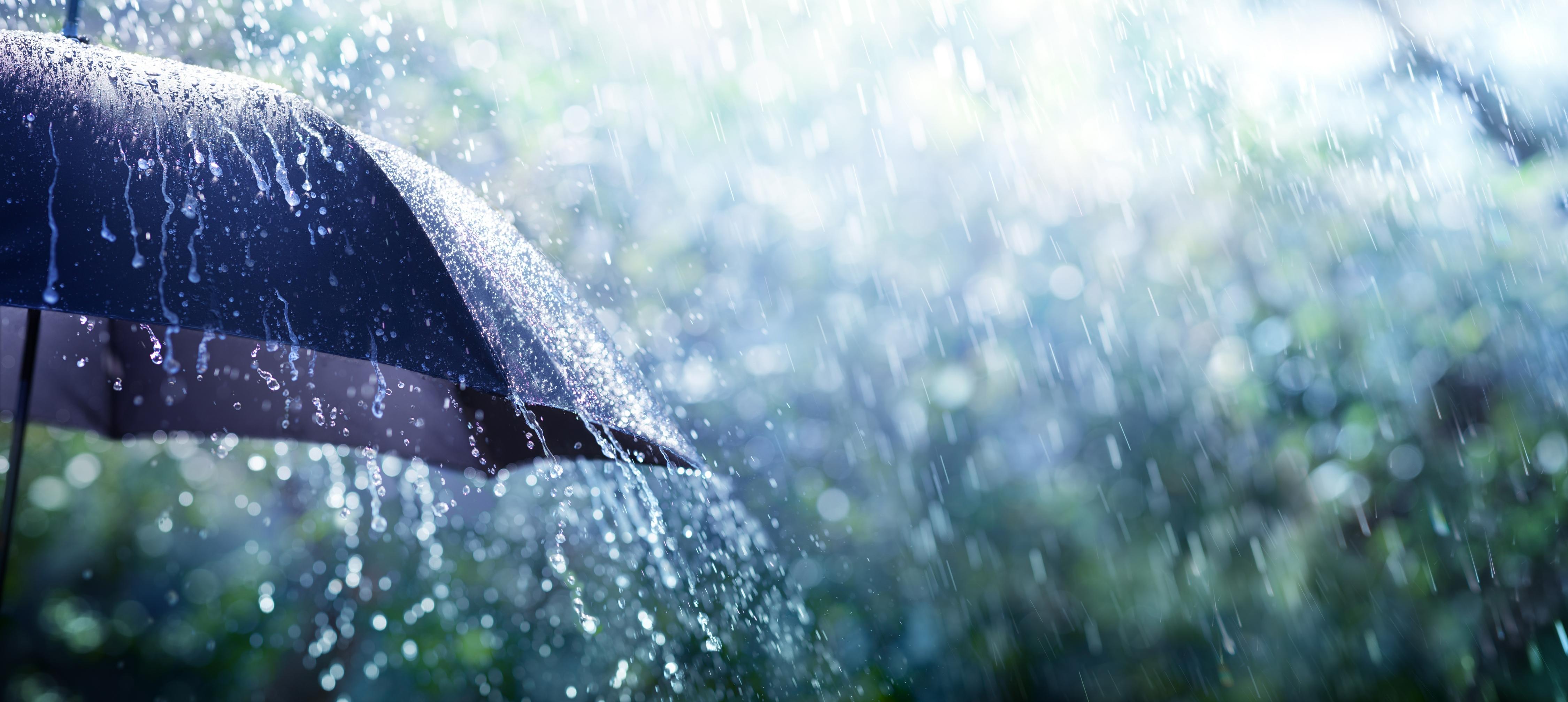umbrella-panarama.jpg