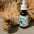 cat paw and neurogan cbd pet oil bottle