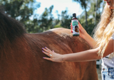 CBD For Horses Research