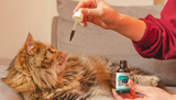 How to Give CBD Oil to Cats - Benefits & Dosage