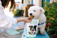 How to Give CBD to Your Dog in 3 Easy Ways