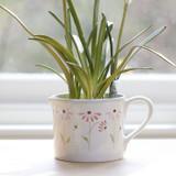 Susie Watson pottery Echinacea Planter.