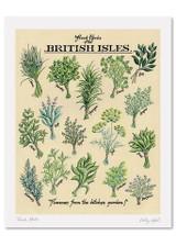 Kelly Hall Fresh Herbs Print. Printed in England.