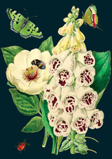 Foxglove & Peony Greetings Card by Madame Treacle.