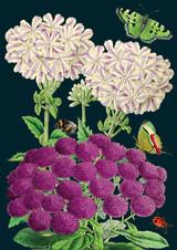 Purples Greetings Card