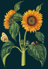 Sunflowers Greetings Card by Madame Treacle.