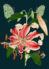 Tiger Lily Greetings Card by Madame Treacle.