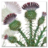 Thistles Greetings Card by Emma Ball.