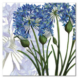 Agapanthus Greetings Card by Emma Ball.