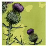 Thistle Greetings Card by Emma Ball.