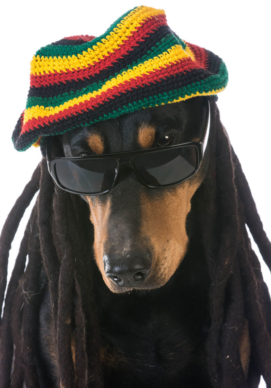 Just Because Your Dog Is Taking CBD... Doesn't Mean He Is Going To Start Acting Like This!