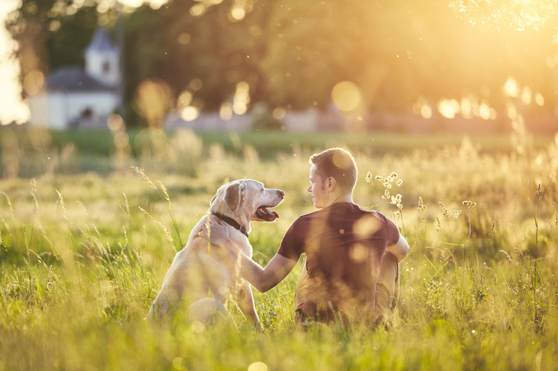 The Dog Days of Summer…