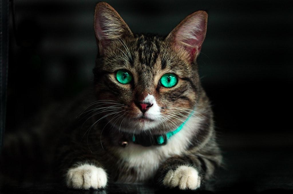 adorable-animal-blur-cat-617278-1-.jpg