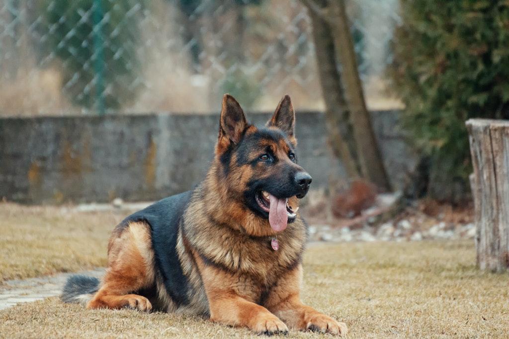 animal-animal-photography-blur-breed-333083.jpg