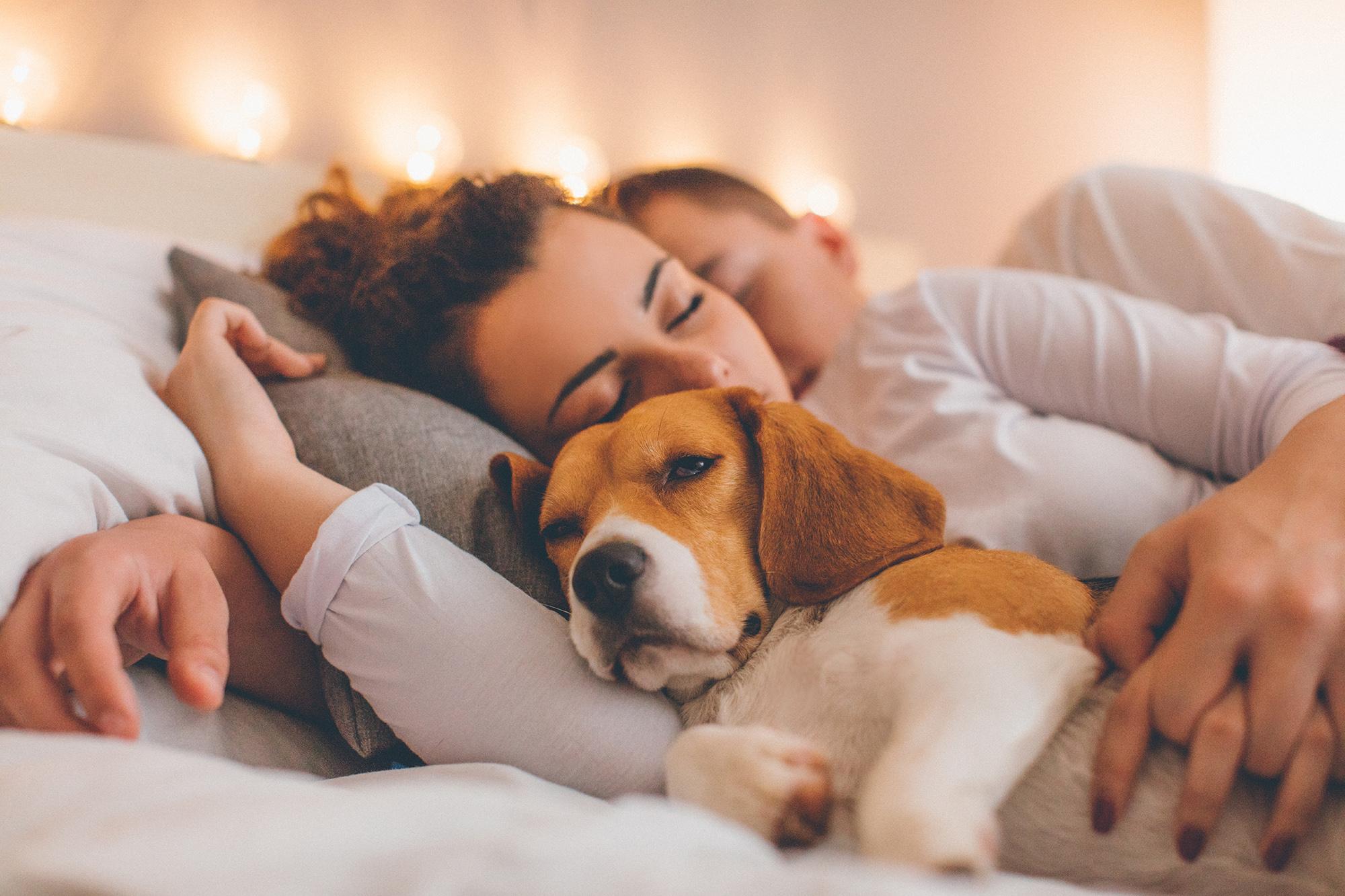asleep-family-with-dog-635904362.jpg
