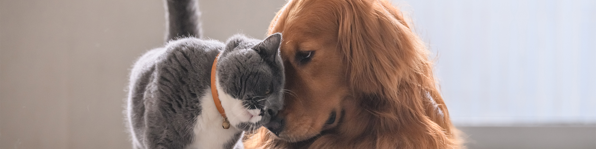 cat-and-dog-banner.jpg