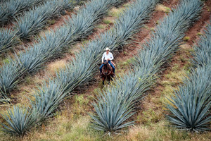 The History of Tequila