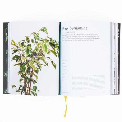 Plantopedia: The Definitive Guide to Houseplants by Lauren Camilleri & Sophia Kaplan
