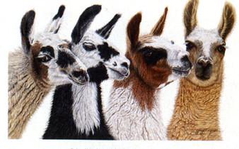 Four Llamas T-shirt - Imprinted Llamas