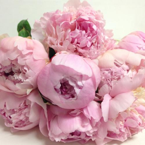 Eco  Friendly Peony Roses