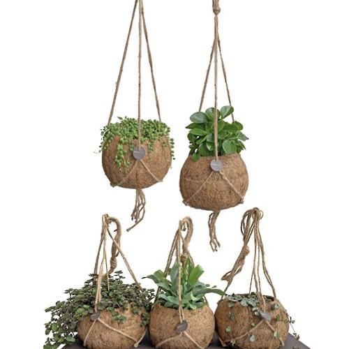 Kokodama hanging plant