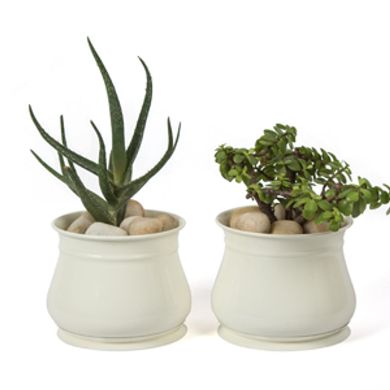 H Potter Succulent Planter Pots Set Of 2 Outdoor Indoor