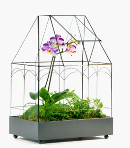 H Potter Terrarium Wardian Case Glass Plant Container Table Top Tall Orchids