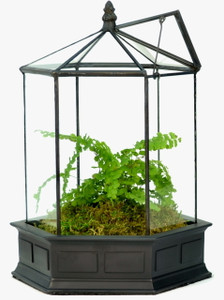 H Potter Terrarium Wardian Case Glass Plant Container Table Top Tall Orchids six sided geometric resin base