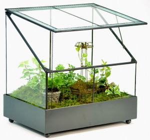 H Potter Terrarium Wardian Case Glass Plant Container Table Top Tall Orchids Herbs Fairy Garden Display Case
