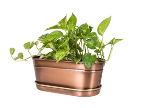 planter succulent galvanized metal with tray patio outdoor box holder balcony pot garden deck flower plant copper brass indoor tin bowl foliage potted iron kitchen bathroom desk holder container antique antiqued vintage stainless steel round rectangular centerpiece large big