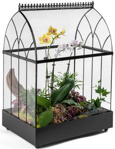 large glass plant terrarium wardian case container