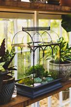 Shop Top Selection Of Wardian Case Terrarium For Sale