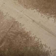Cowhide Rug DEC033 (230cm x 210cm)