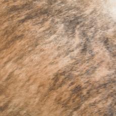 Cowhide Rug MAY149-21 (210cm x 200cm)