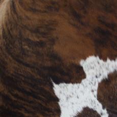 Cowhide Rug AUG113-21 (200cm x 170cm)