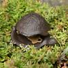 Cast Iron Turtle Key Hider
