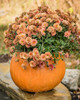 "Concrete Pumpkin, Pumpkin Planter , fall mum planter, Autumn dcoration, Halloween Planter, Fall mum CF705 Athena Planter.""Pumpkin Planter , fall mum planter, Autumn dcoration, Halloween Planter, Fall mum. Garden_Accents_files/Pumpkin Planter , fall mum planter, Autumn dcoration, Halloween Planter, Fall mum CF705 Athena Garden.jpg"" alt=""Autumn Gourd Hand Sculpted Fall DecorStone Pumpkin"