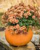 """Concrete Pumpkin, Pumpkin Planter , fall mum planter, Autumn dcoration, Halloween Planter, Fall mum CF705 Athena Planter.""""Pumpkin Planter , fall mum planter, Autumn dcoration, Halloween Planter, Fall mum. Garden_Accents_files/Pumpkin Planter , fall mum planter, Autumn dcoration, Halloween Planter, Fall mum CF705 Athena Garden.jpg"""" alt=""""Autumn Gourd Hand Sculpted Fall DecorStone Pumpkin"""