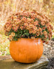 """Fall Decor pumpkins, Pumpkin Planter , fall mum planter, Autumn dcoration, Halloween Planter, Fall mum CF705 Athena Planter.""""Pumpkin Planter , fall mum planter, Autumn dcoration, Halloween Planter, Fall mum, Garden_Accents_files/Pumpkin Planter , fall mum planter, Autumn dcoration, Halloween Planter, Fall mum CF705 Athena Garden.jpg"""" alt=""""Autumn Gourd Hand Sculpted Fall DecorStone Pumpkin"""