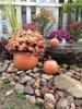 """DYI concrete pumpkinsPumpkin Planter , fall mum planter, Autumn dcoration, Halloween Planter, Fall mum CF705 Athena Planter.""""Pumpkin Planter , fall mum planter, Autumn dcoration, Halloween Planter, Fall mum, Garden_Accents_files/Pumpkin Planter , fall mum planter, Autumn dcoration, Halloween Planter, Fall mum CF705 Athena Garden.jpg"""" alt=""""Autumn Gourd Hand Sculpted Fall DecorStone Pumpkin"""