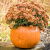 "Cement pumpkin, Pumpkin Planter , fall mum planter, Autumn dcoration, Halloween Planter, Fall mum CF705 Athena Planter.""Pumpkin Planter , fall mum planter, Autumn dcoration, Halloween Planter, Fall mum, Garden_Accents_files/Pumpkin Planter , fall mum planter, Autumn dcoration, Halloween Planter, Fall mum CF705 Athena Garden.jpg"" alt=""Autumn Gourd Hand Sculpted Fall DecorStone Pumpkin"