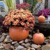 """Hand Sculpted Pumpkin, Pumpkin Planter , fall mum planter, Autumn dcoration, Halloween Planter, Fall mum CF705 Athena Planter.jpg"""" alt=""""Pumpkin Planter , fall mum planter, Autumn dcoration, Halloween Planter, Fall mum, Garden_Accents_files/Pumpkin Planter , fall mum planter, Autumn dcoration, Halloween Planter, Fall mum CF705 Athena Garden.jpg"""" alt=""""Autumn Gourd Hand Sculpted Fall DecorStone Pumpkin"""